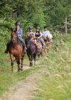 ©aurel horse  (1) -